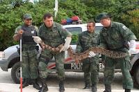 POLICIAIS MILITARES DO PELOTÃO AMBIENTAL