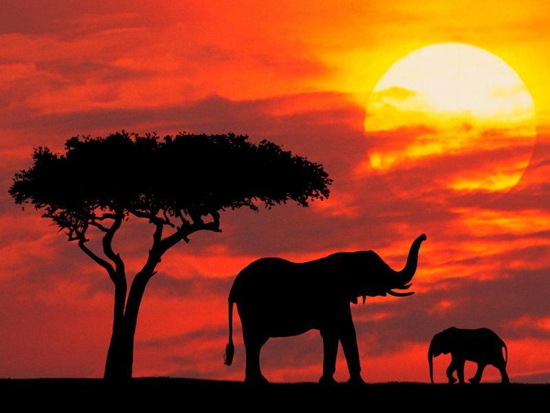 """Résultat de recherche d'images pour """"nice evening animals"""""""