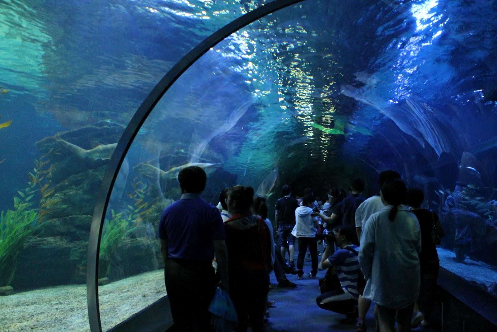 Shark Diving at the Busan Aquarium Lindsay Eryn