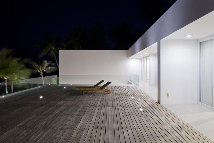 Large terrace ant night