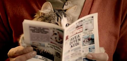 Gazete okuyan kedi