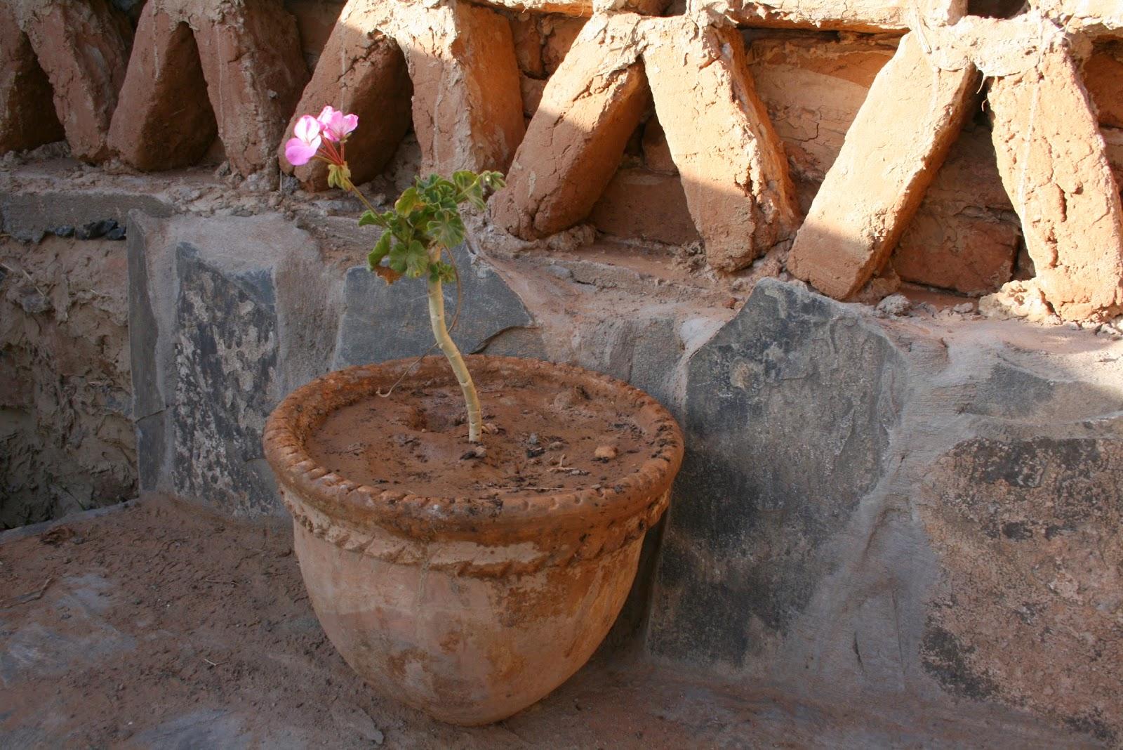 arfoud, desierto de marruecos, viajar a marruecos, marrakech, felicidad