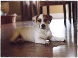 Moja kochana psina:-)