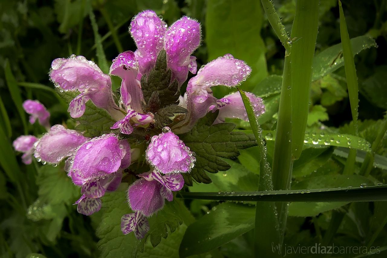 Naturaleza y Paisajes de Catamarca: Flores silvestres de  - Fotos De Flores Silvestres Y Sus Nombres