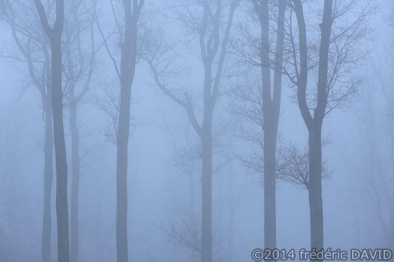 nature végétation brume silhouettes forêt Fontainebleau Seine-et-Marne