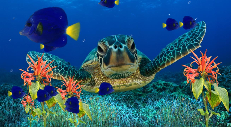 Animated aquarium wallpaper for Fish tank 3d live wallpapers