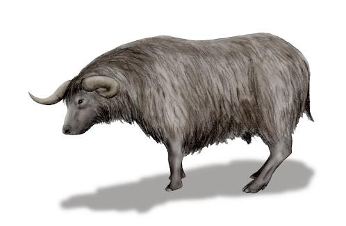 Euceratherium bovido fosil del pleistoceno