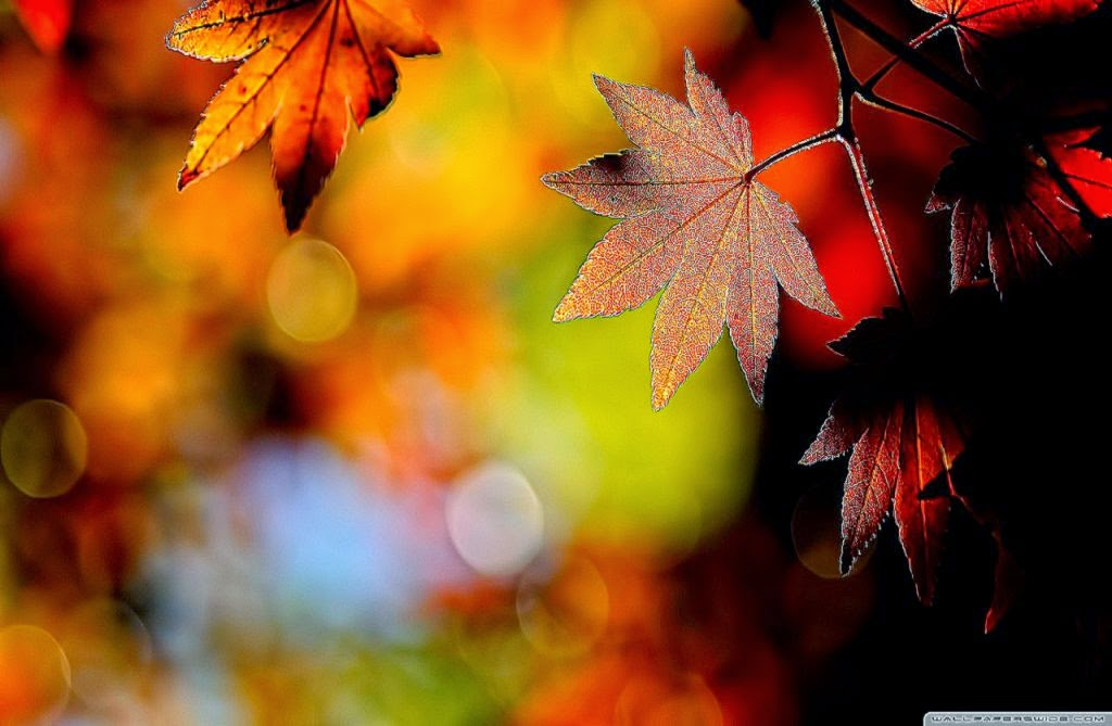 Best Autumn Fall Maple Leaves Hd Wallpaper Collection ...