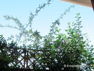 Non è bellissimo vivere in mezzo al verde? E avere una finestra da cui osservarlo?