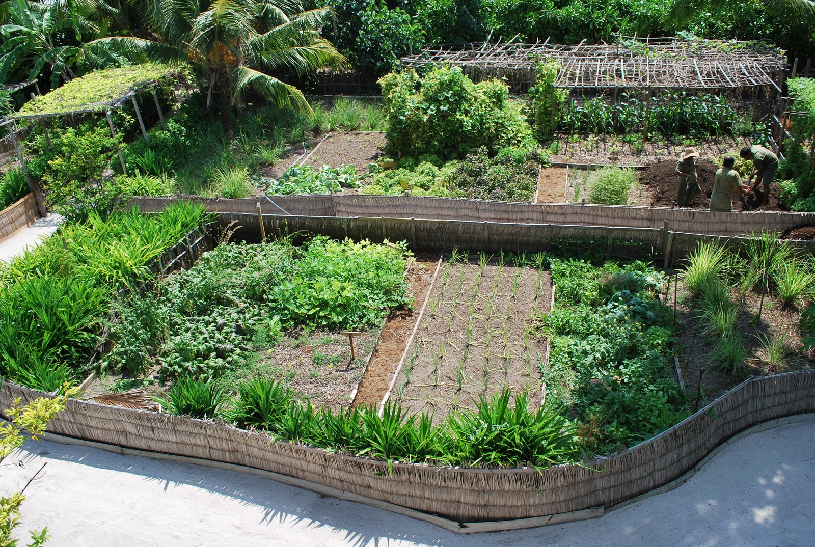 Garden design permaculture pinterest for Garden bed designs