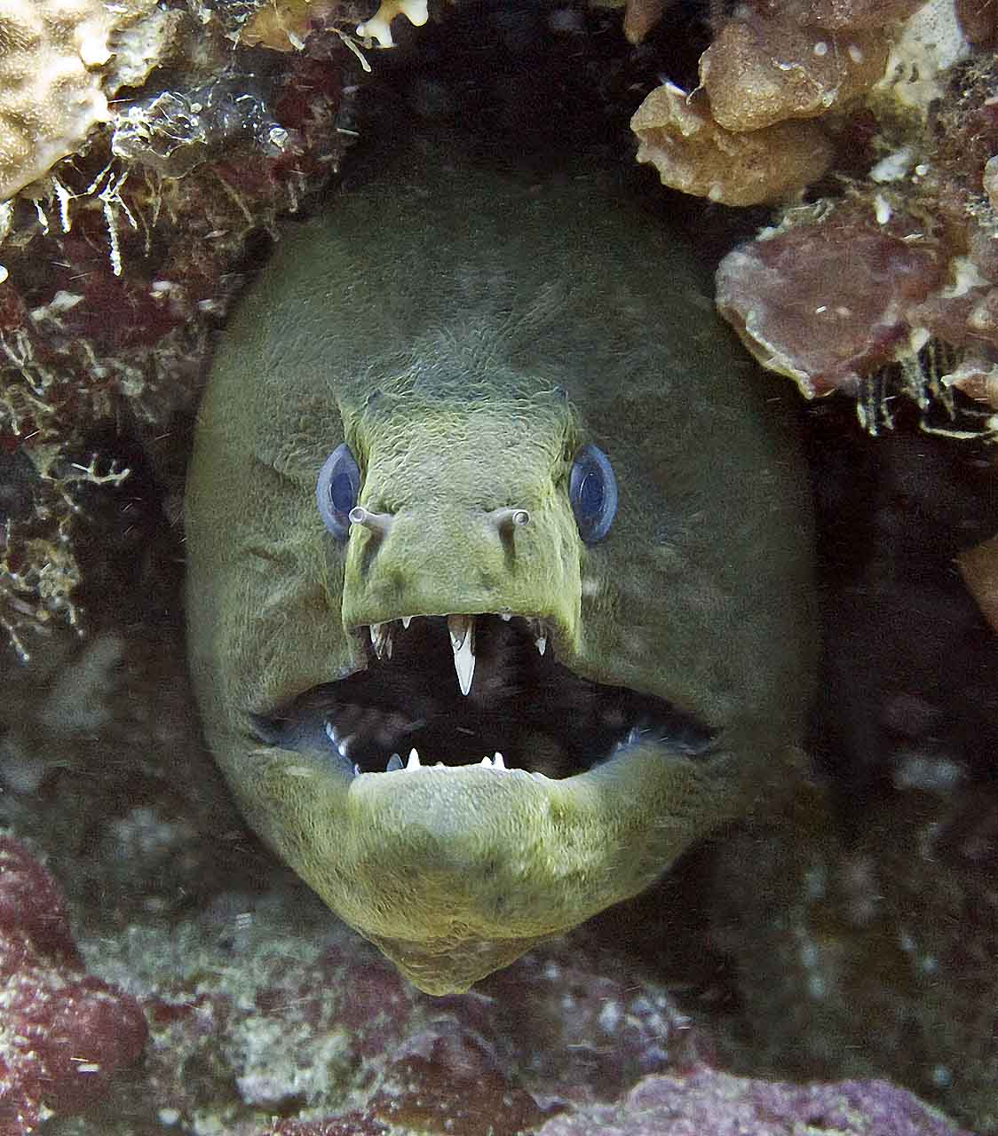 Moray Eel Attack