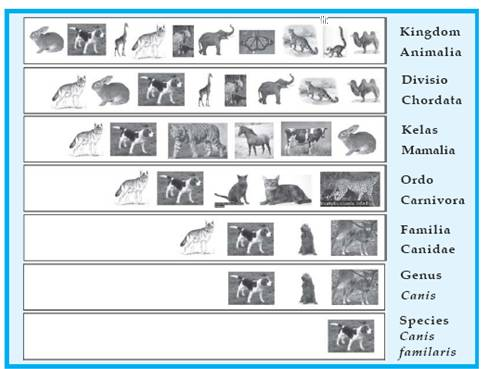 international code of botanical nomenclature 2012 pdf