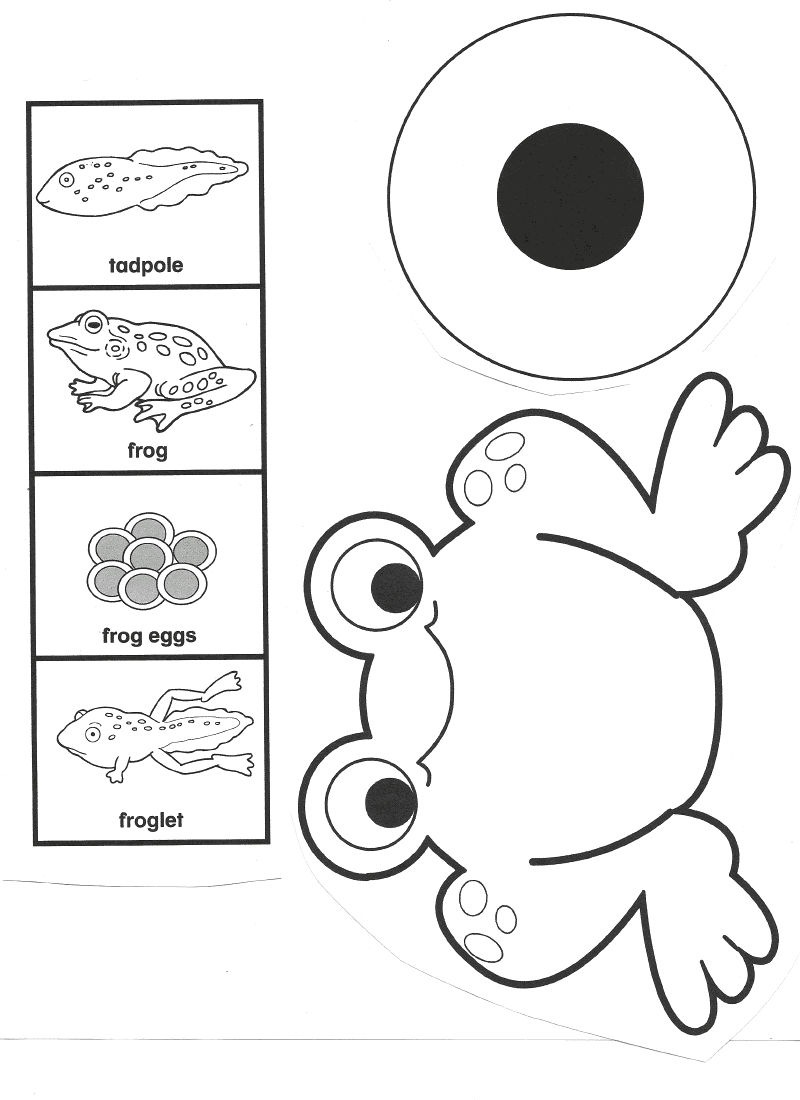 Enterprising image for life cycle of a frog printable