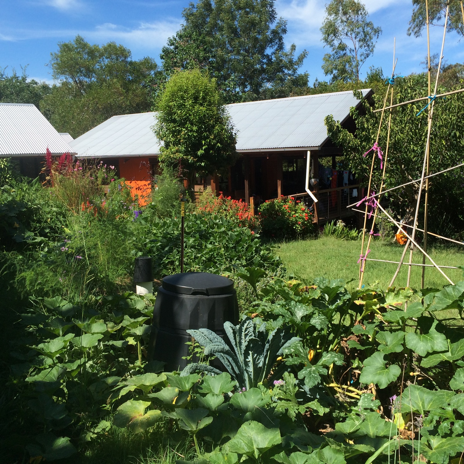 our permaculture life hardy summer plants