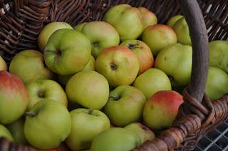 """Friskplukket æbler sort """"Hvid Astrakan"""""""