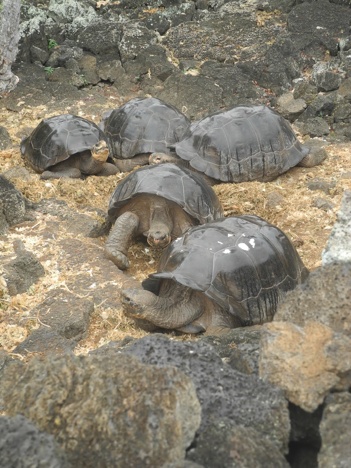 Insel der Schildkröten | nsw amerika