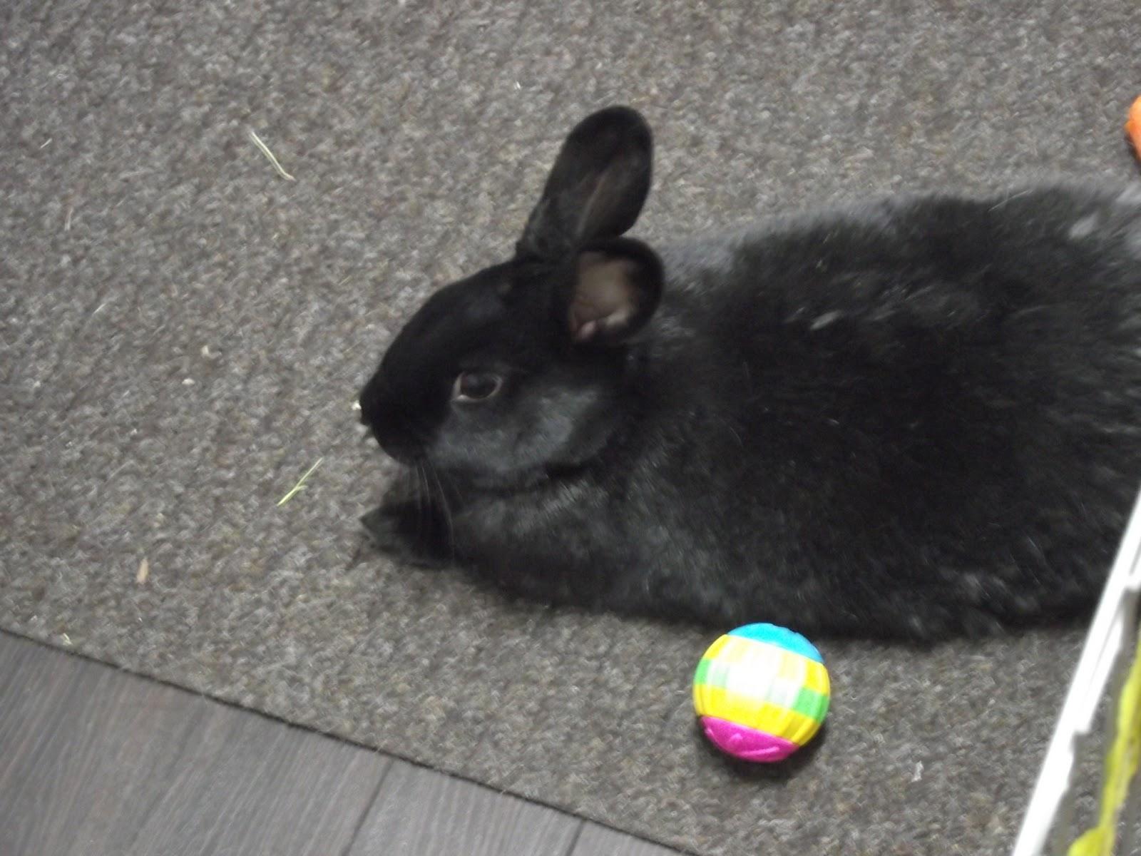 bunny homes adoption