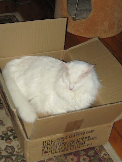 Gambar Kucing Anggora yang Lucu