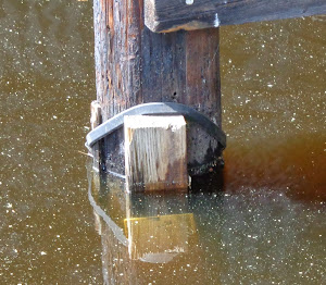 West Neck Water Level Report (in hundredths of a foot)