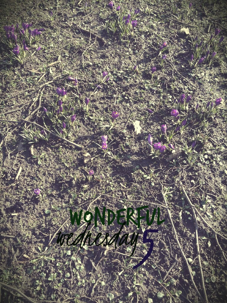 Wonderful Wednesday 5