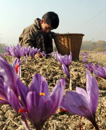 saffron boy