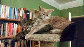 zwei Katzen liegen auf einem Kratzbaum