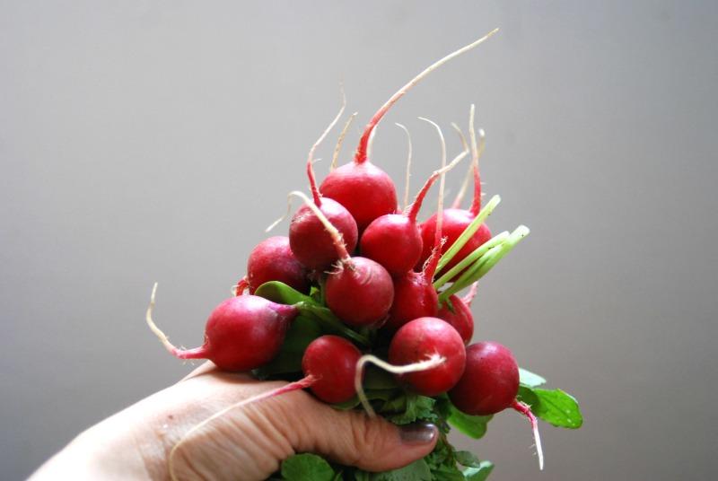 mazzo ravanelli rossi primavera
