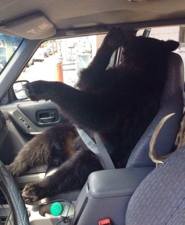 Funny animals of the week - 25 July 2014 (40 pics), funny animal photos