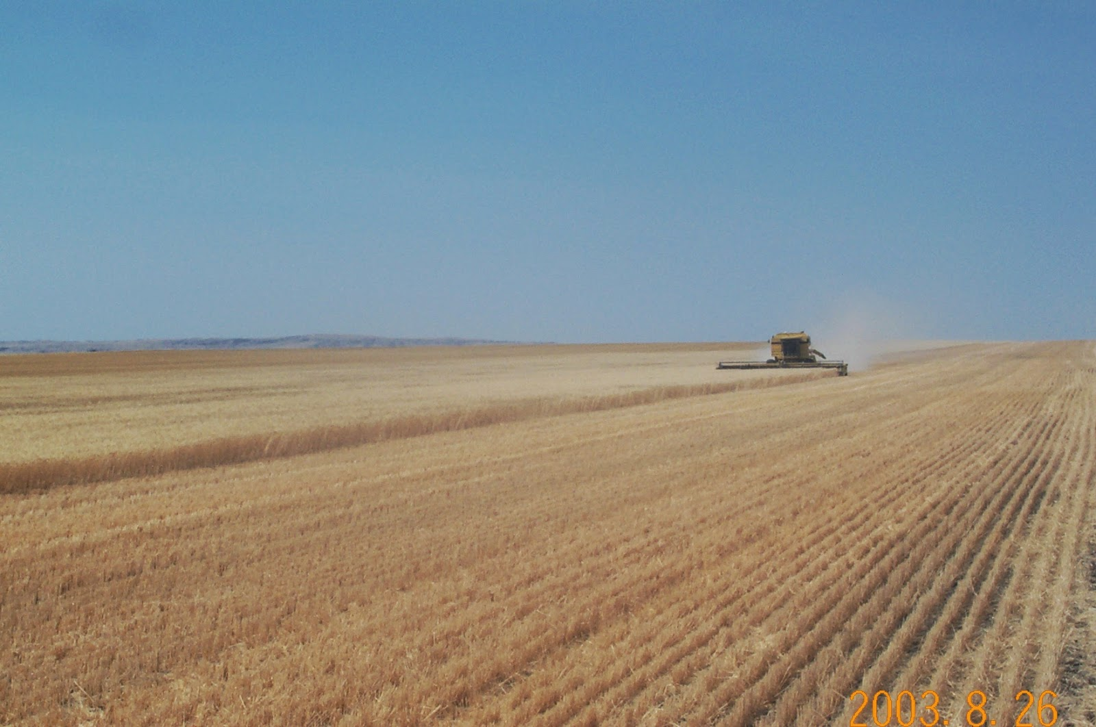 Durum wheat on Section 2 Willow Creek Farm Ltd.