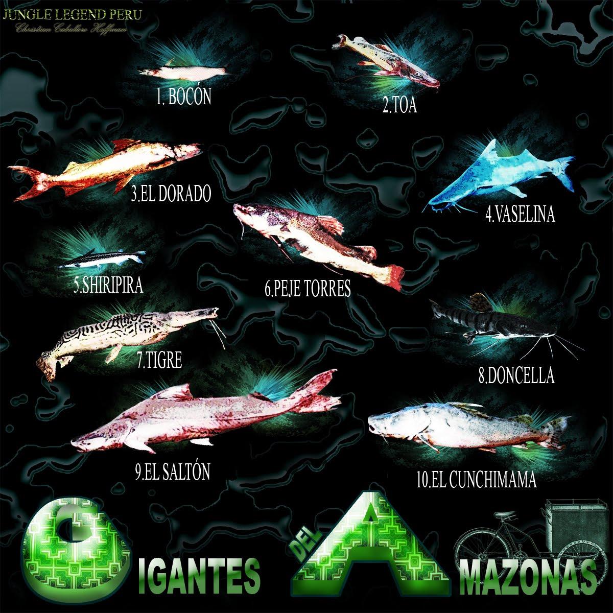 Atractivos turisticos de Iquitos Peru - Loreto Amazonas 70