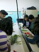 Botânica: Os vegetais e suas características