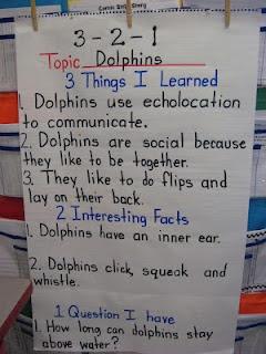 narrative essay dolphin