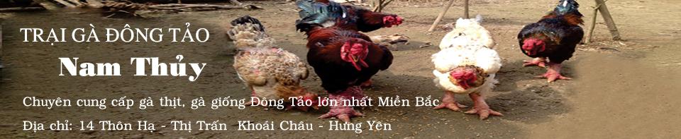 Bán Gà Đông Tảo Hưng Yên Thuần Chủng Giá Gốc
