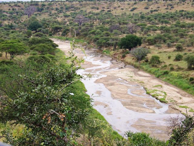 Tarangire National park Tembea Tanzania