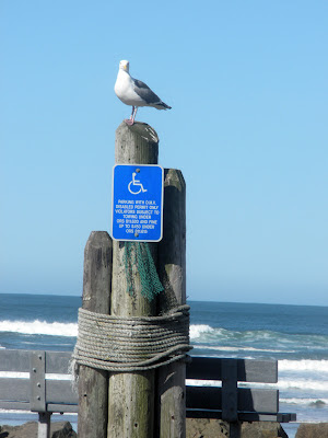 photo of seagull in Rockaway Beach Oregon