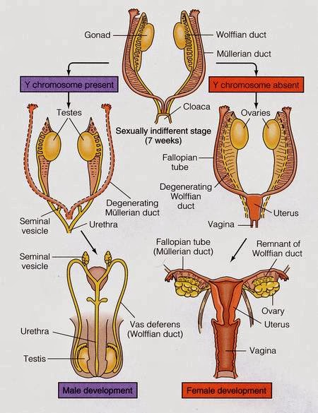 2. Semester Biologie | Biologie