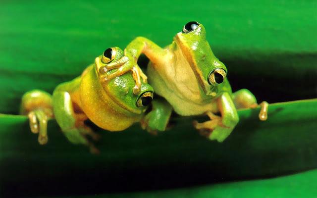Fondos de pantalla animados de ranas - Imagui