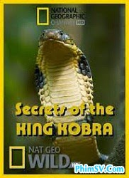 Bí Mật Rắn Hổ Mang Chúa - National Geographic Secrets Of The King Cobra