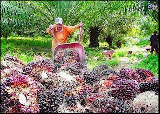Syarikat-Syarikat Kelapa Sawit di Malaysia