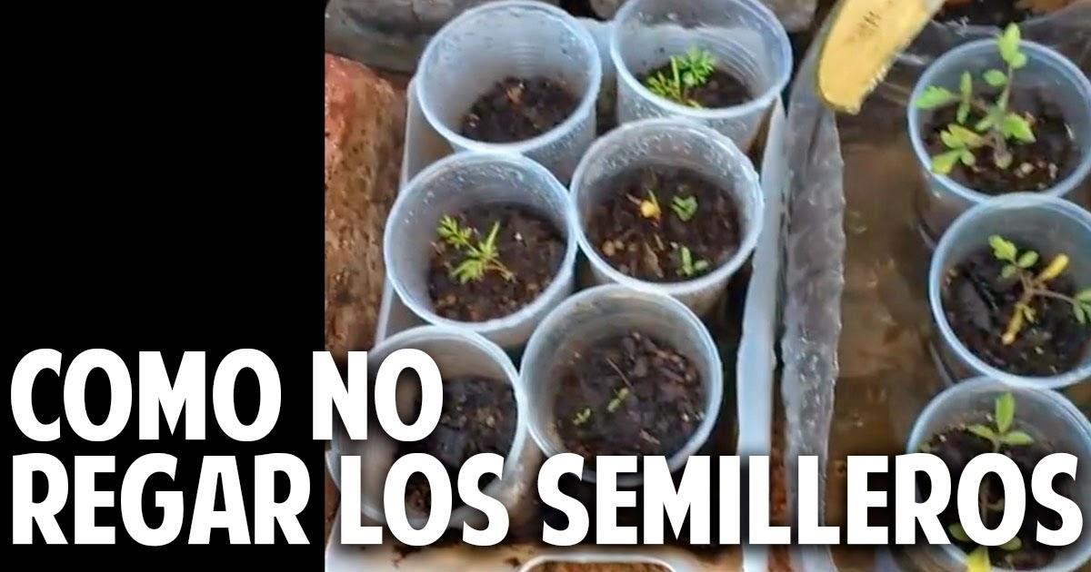Como no regar los semilleros de tomate y otras respuestas - Cosas del jardin ...