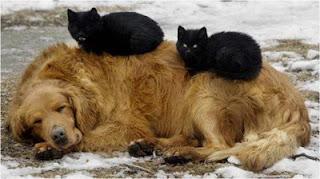 Foto Lucu Kucing Anjing pict
