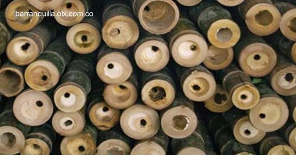 Cañas de bambú y guadua colombiano