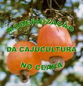 Modernização da Cajucultura