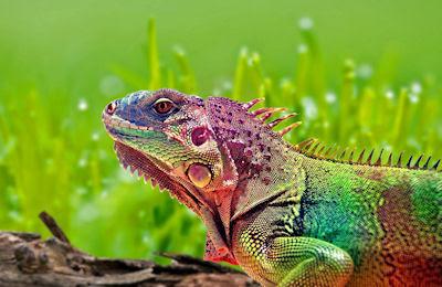 Me dicen el camaleón porque cambio de color...