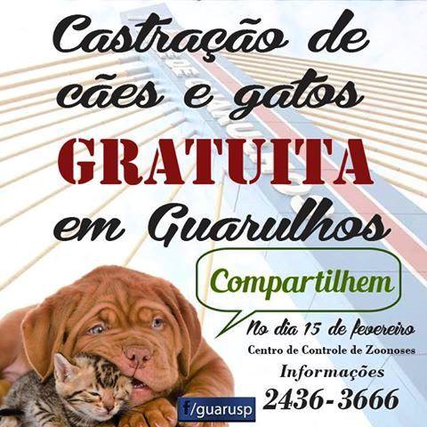 15 de fevereiro: Guarulhos