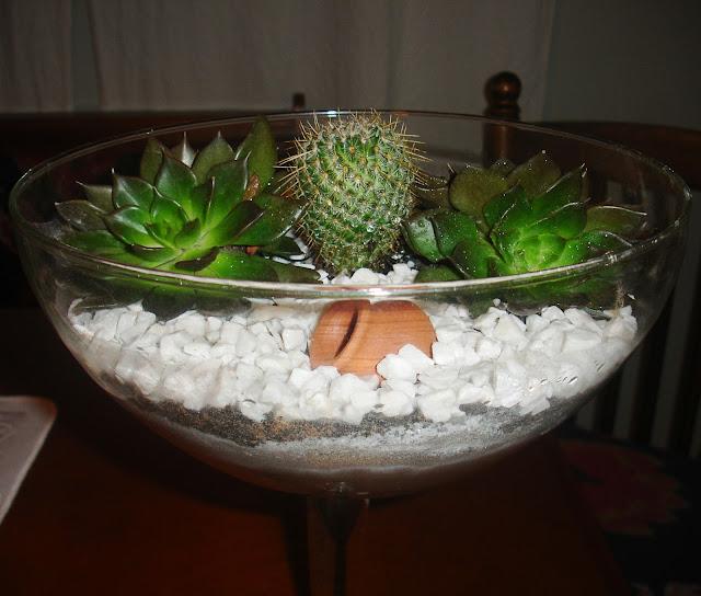mini jardim cactos suculentas : mini jardim cactos suculentas:Inovando com Cactos e Suculentas.: Mini Jardim de Cacto e Suculentas.