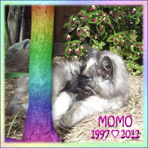 Goodbye sweet MoMo