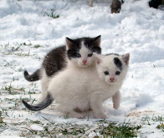 Dos adorable gatito