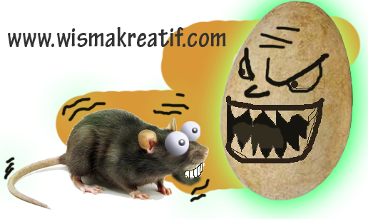 Mengusir Tikus Wirok menggunakan telur Angsa