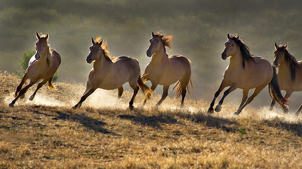 Quotes About Wild Hors...